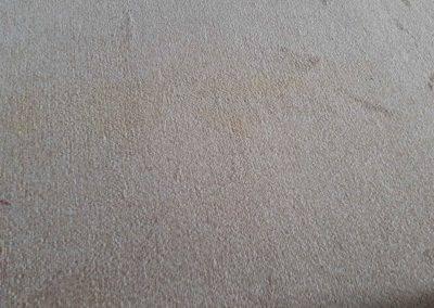 Carpet Kleen22